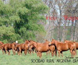 curso caballo