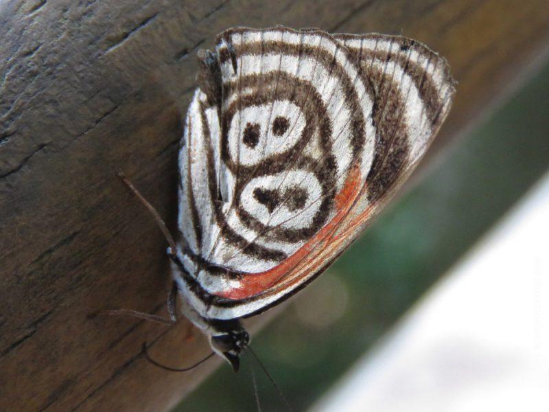 cataratas mariposa iguazu