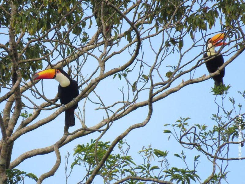 Aves de Misiones PASEOS TRADICIONALES EN CATARATAS DEL IGUAZÚ